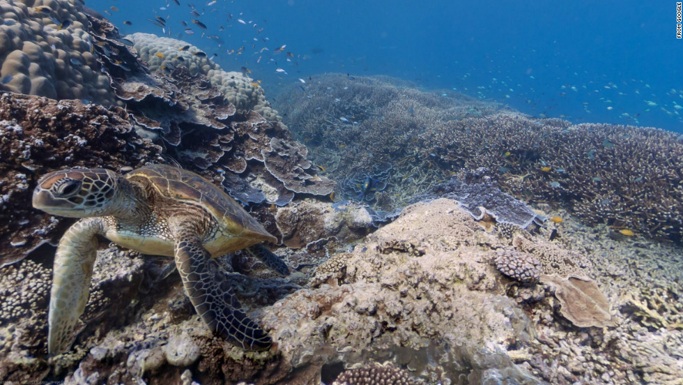 Google is partnering with the Catlin Seaview Survey to bring undersea imagery to Google Maps. This sea turtle swims past a Google camera near Heron Island, Great Barrier Reef, Australia.