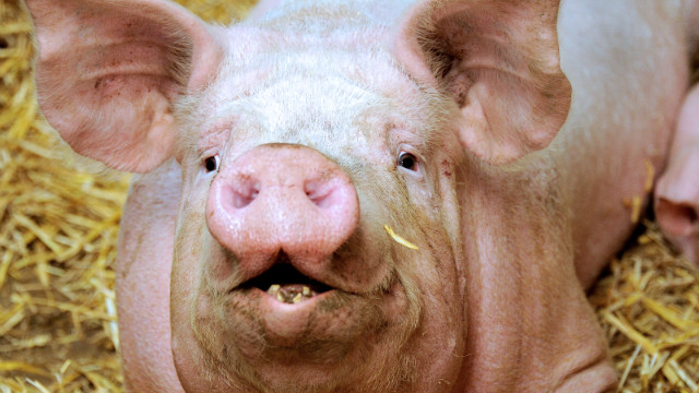 The Web lost its mind over the prospect of a bacon shortage. Experts now say we won't be pork-free any time soon.