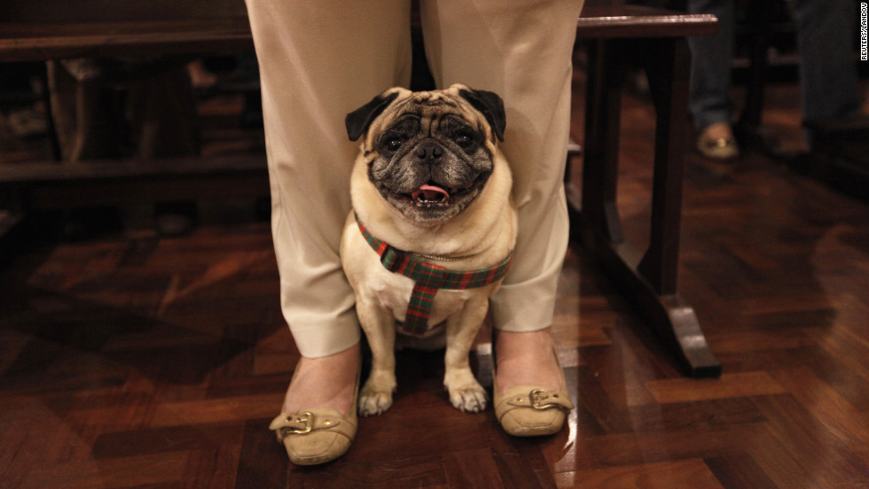 A dog peeks from between the legs of its owner at Sao Francisco de Assis Church on Thursday.