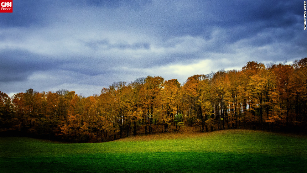 "This forest of yellow trees shows why people come to <a href=""http://ireport.cnn.com/docs/DOC-856315"">Vermont</a> for the autumn leaves."