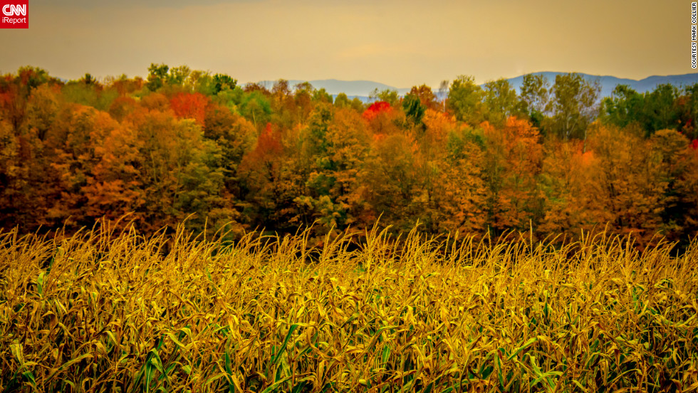 "Two icons of autumn -- corn and colorful leaves -- make a beautiful scene in <a href=""http://ireport.cnn.com/docs/DOC-856315"">Barre, Vermont</a>."