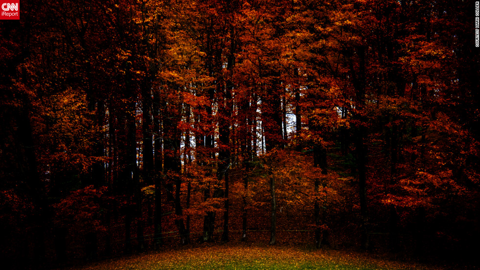 "Dark orange and red fall leaves provide a dramatic contrast to the green grass in <a href=""http://ireport.cnn.com/docs/DOC-856315"">Walden, Vermont</a>."