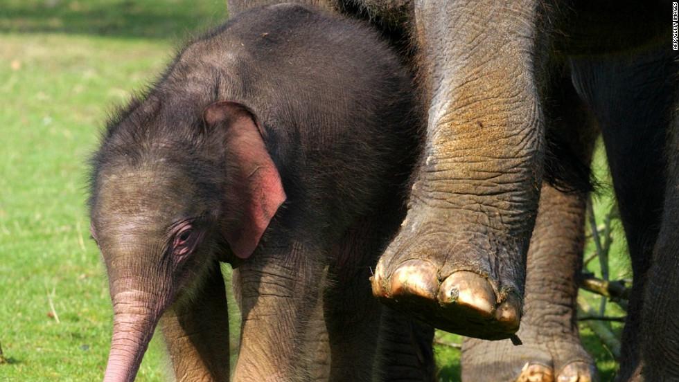 elephant hair bracelet asian