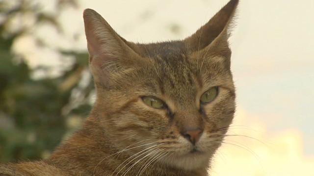 Stray animals spark cat fight in Turkey