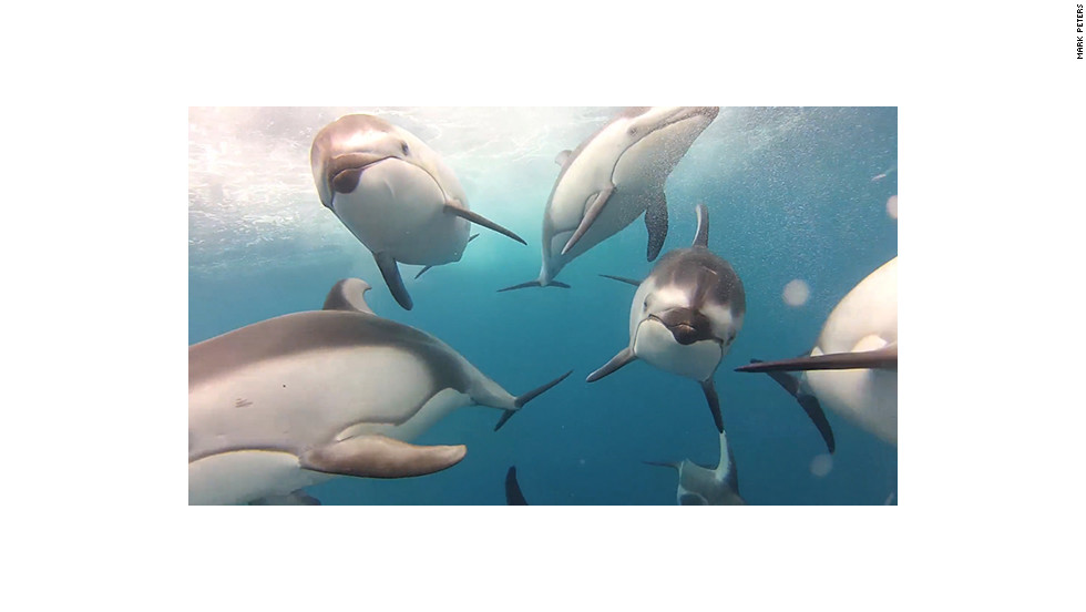 Fisherman Mark Peters captured this video of dolphins using a GoPro camera and a custom torpedo-shaped housing he built.