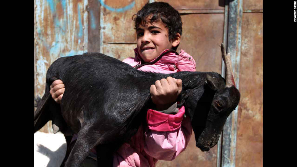 A Yemeni boy carries a goat at an animal market in the capital, Sanaa, on Tuesday.