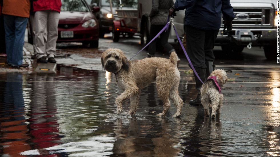 Dog owners in Alexandria, Virginia, gathered to see the flood waters left by Hurricane Sandy on Tuesday.