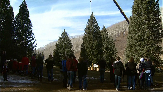 The Capitol Christmas tree is chosen