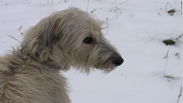 Kat Kinsman's Irish Wolfhound, Mordred, was a huge presence in her home and came to occupy her heart