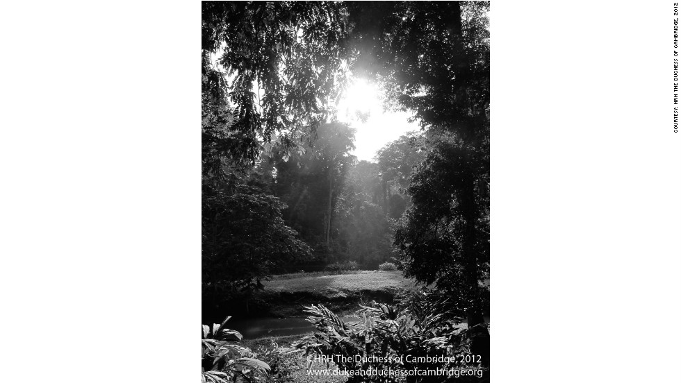 This photo was taken during a private walk through part of the jungle, close to the Danum Valley research station.