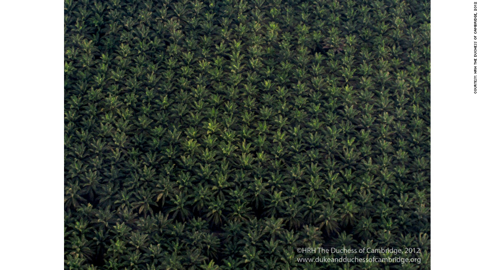 TRH flew over this palm oil plantation on their way to the Royal Society research station in Sabah, Malaysia.