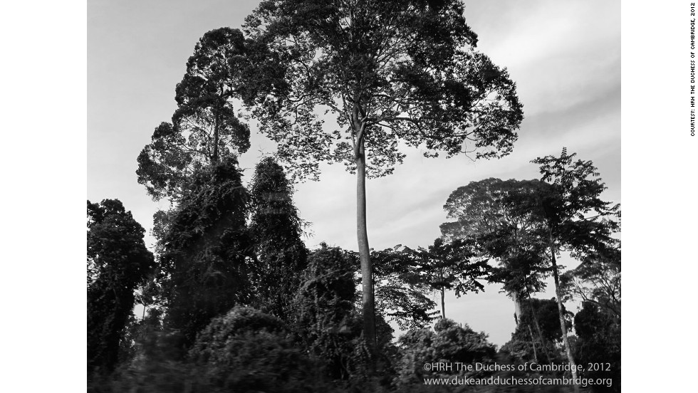 Taken as The Duke and Duchess were travelling by car through the rain forest in Danum Valley, Sabah, Malaysia.
