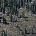 forest utah 2012