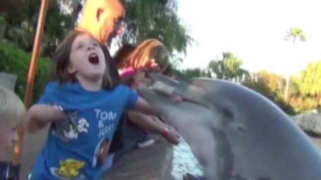 Girl bitten by dolphin at SeaWorld