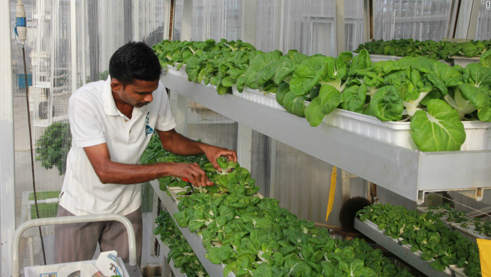 Currently only 7% of Singapore's greens are locally grown. Sky Greens believes that expanding vertical farming in the country could make that figure rise to 50%.