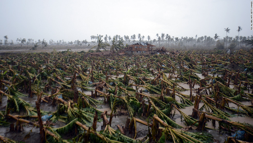 Typhoon Bopha toppled thousands of banana trees on a plantation in New Bataan, Compostela Valley province, in the Philippines on Friday, December 7.