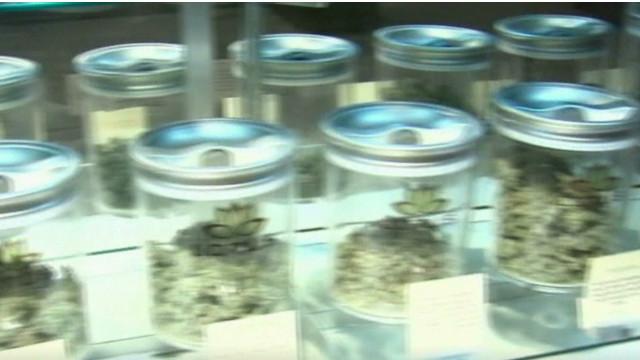 Federal battle over legal marijuana