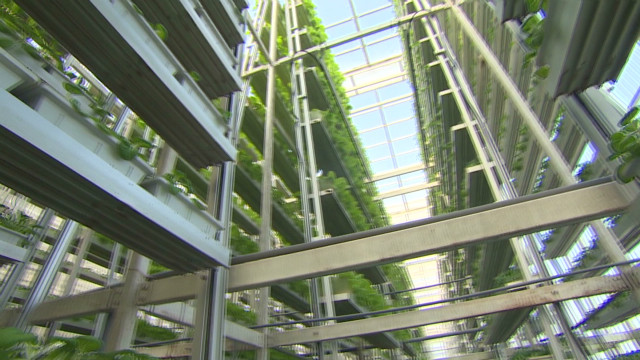 Singapore's vertical farm