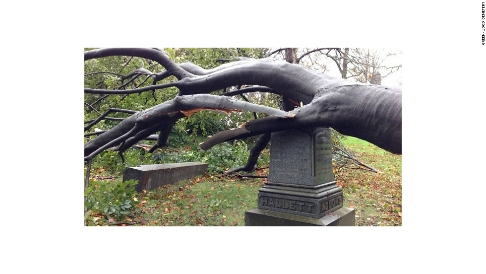 This beech tree, knocked down by Sandy's winds, toppled a granite obelisk off this gravestone.