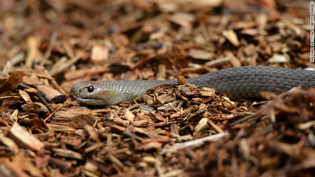 The snakes let loose on campus were later verified as non-venomous.