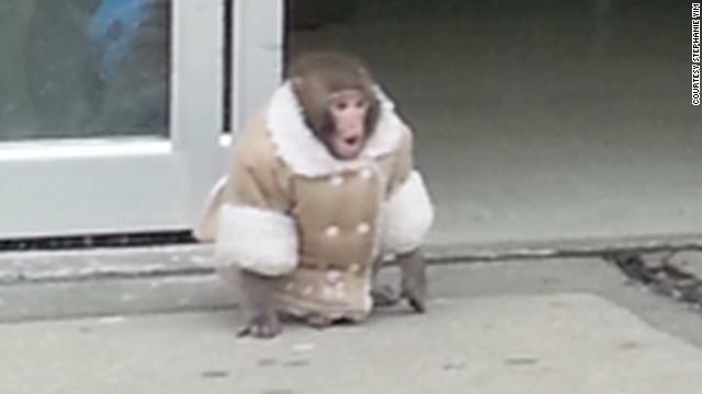 moos pkg ikea monkey_00001711