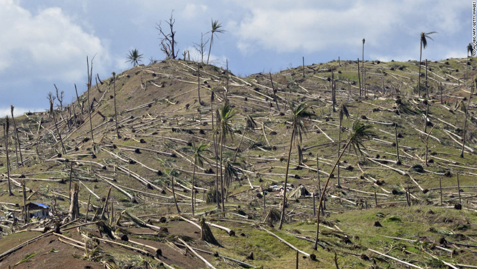 Uprooted coconut trees lay in the mountains of Cateel, Davao Oriental province, on December 11.