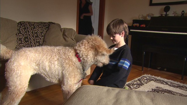 Boy raises money for seizure alert dog