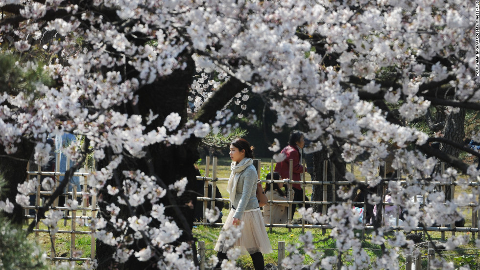 Enjoy the cherry blossoms without the crowds during Golden Week in Tokyo.