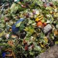food waste generic
