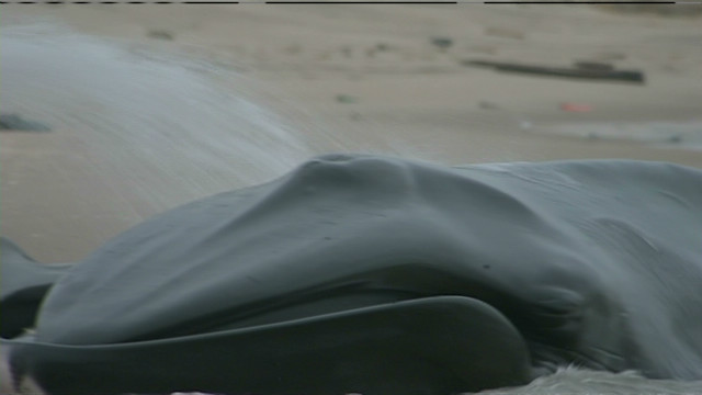 See beached whale in New York City