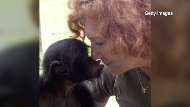 Conservationist saves endangered apes