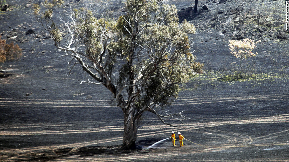 Firefighters continue to hose around a tree that survived a fire in Oura in New South Wales on Tuesday.