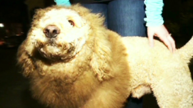 'Lion' on the loose in Virginia