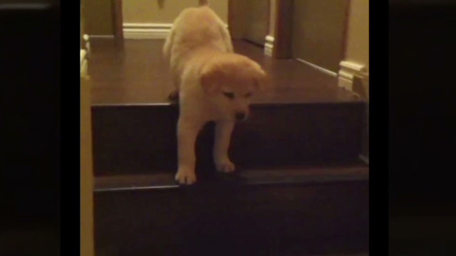 orig jtb distraction puppy learns stairs_00002505.jpg