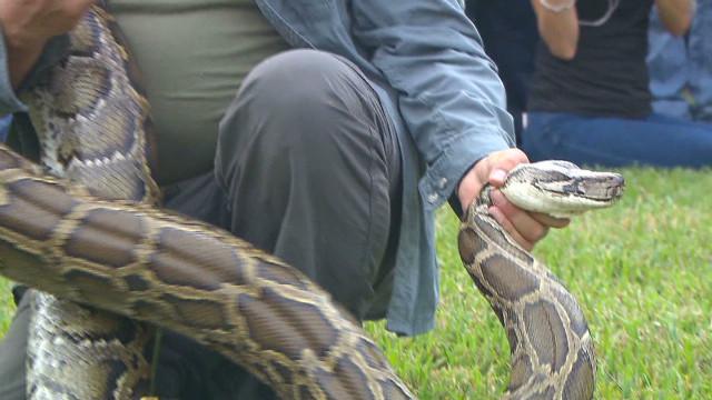First kills made in python challenge