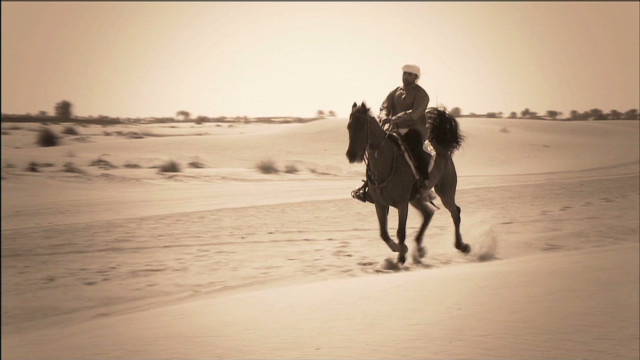 The Arabian horse: King of endurance