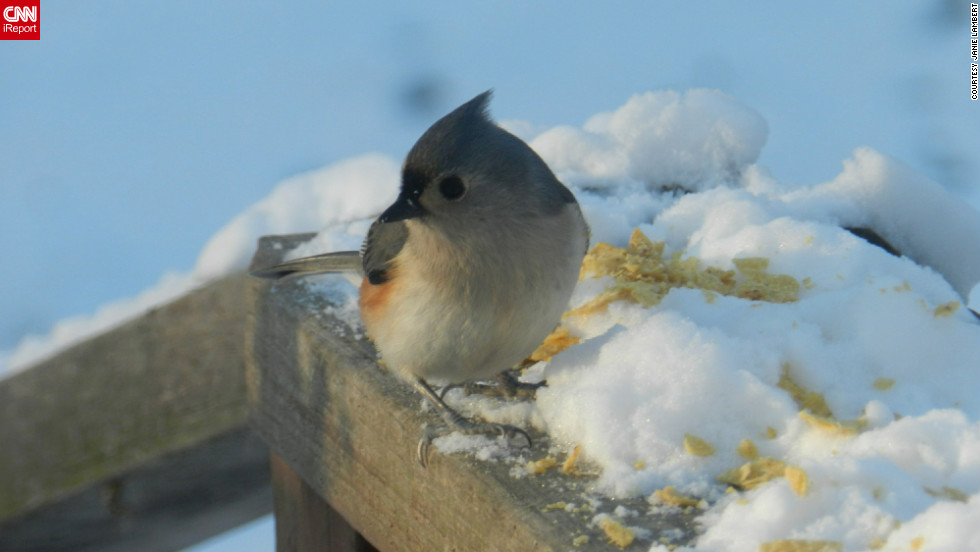 """""""Do you think bird feet get cold?"""" wondered Janie Lambert as she <a href=""""http://ireport.cnn.com/docs/DOC-915765"""">snapped this photo</a> from her Hughesville, Maryland, back yard. It was about 23 degrees when she captured the image on January 24."""