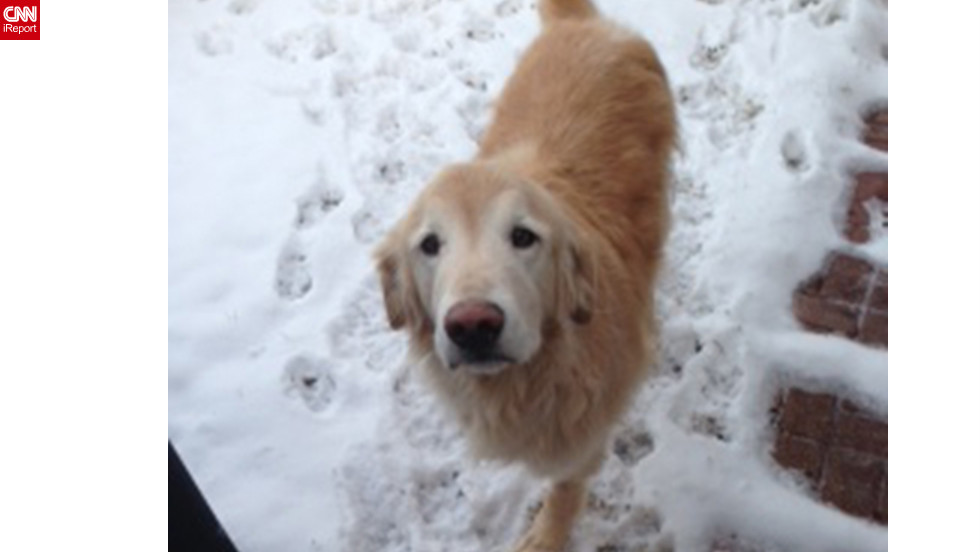 "Golden retriever Ray <a href=""http://ireport.cnn.com/docs/DOC-902562"">enjoys a Christmas snow</a> in Plano, Texas. ""He had to have one of his front legs amputated this past fall due to cancer, so he can't romp around in the snow like he used to, but he does seem to enjoy it!"" said Tamara Galbraith."
