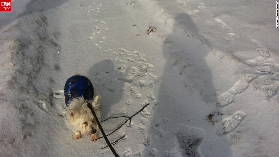 "<a href=""http://ireport.cnn.com/docs/DOC-919168"" target=""_blank"">iReporter Jannet Walsh</a> snapped this photo her shadow along with her 14-year-old dog Andrew. ""It's been hard to walk the dog in the brutally cold arctic weather, as I am too cold to walk him,"" she said."