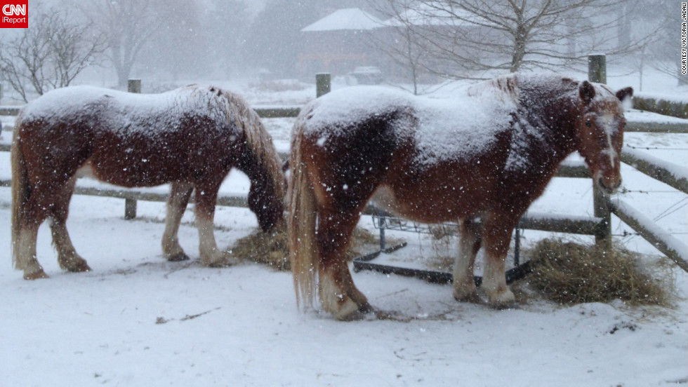 "Draft horses Isabella and Timothy get <a href=""http://ireport.cnn.com/docs/DOC-915603"">blanketed by snow</a> in their Sandyston, New Jersey, pasture. ""Horses need more hay in extreme weather to stay warm,"" explained Victoria Jadali, who shot this photo January 22."