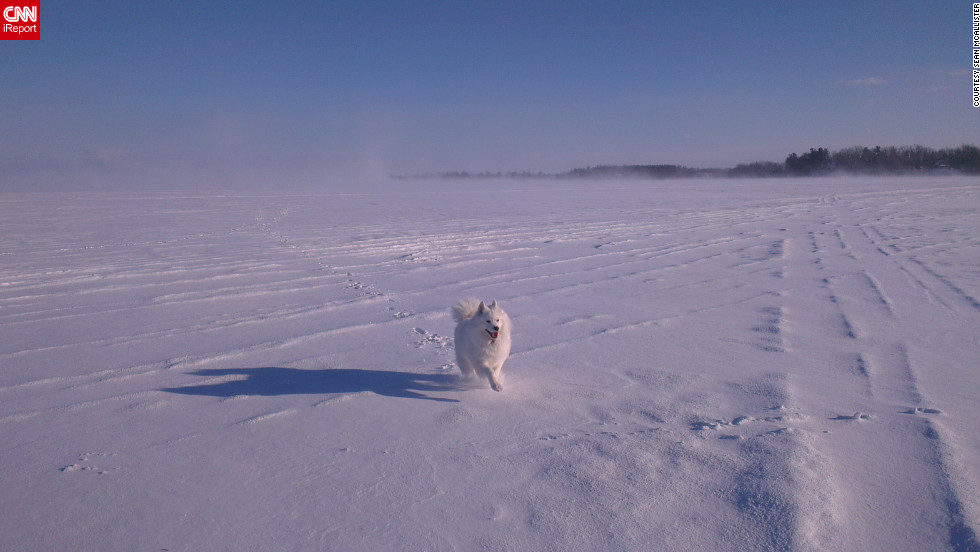 "Mia, a 5-year-old Samoyed, <a href=""http://ireport.cnn.com/docs/DOC-921143"">races across a frozen lake</a> in Hudson, Quebec, in this shot taken by Sean McAllister on January 20."