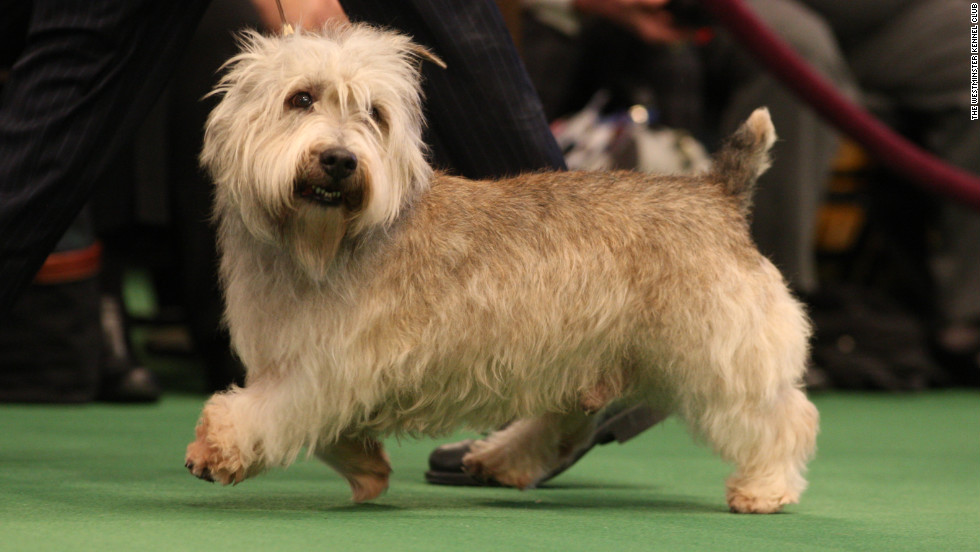 "Named for an Irish valley, the <a href=""http://www.westminsterkennelclub.org/breedinformation/terrier/glenofit.html"" target=""_blank"">Glen of Imaal Terrier</a> is a vermin-hunting dog that was bred with a unique talent: This dog functioned as a cog in elaborate turnspits by pawing a large wheel that turns a spit over a fire. Well done!"