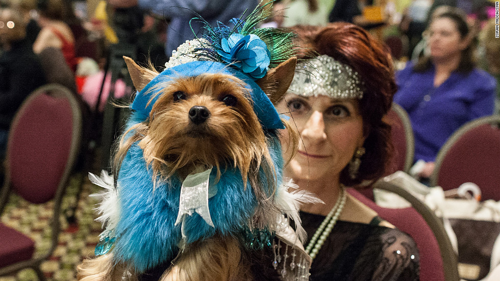 A dog waits with its master at the New York Pet Fashion Show.