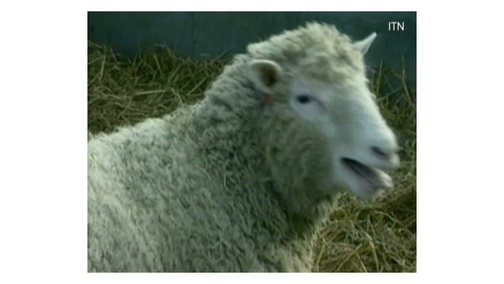 Dolly The Sheep's Cloned Sisters In Good Health Despite Age