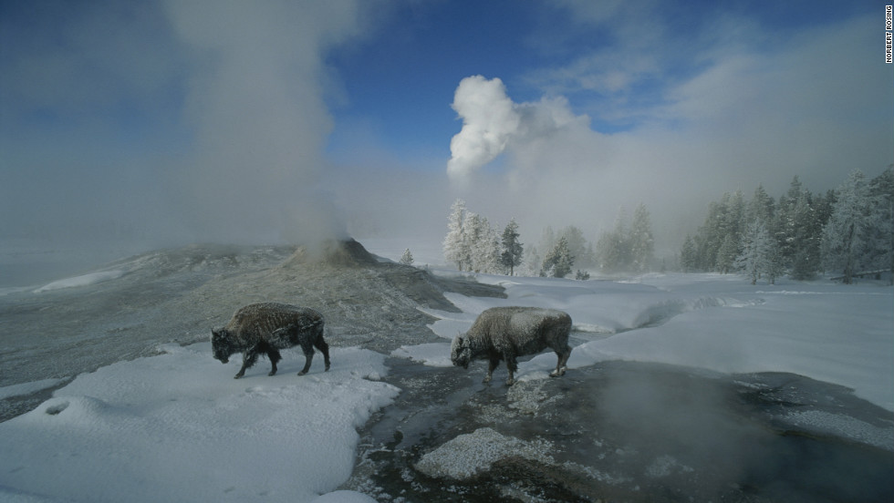 An enduring symbol of the American West, the mighty bison roams freely through another national icon -- Yellowstone National Park's Lion Geyser.