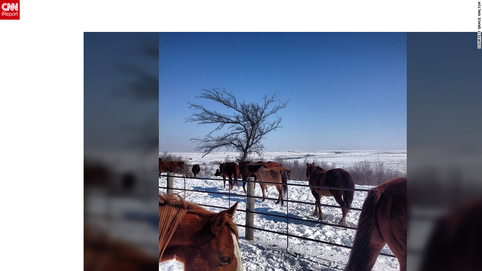 "<a href=""http://ireport.cnn.com/docs/DOC-931997"" target=""_blank"">Grace Walton</a>, a staff member at Camp Wood YMCA in Elmdale, Kansas captured this photo  as horses were let out for the morning. ""I just love our horses and I thought I'd capture one of the many beautiful moments I see here,"" she said.<br /><br />"