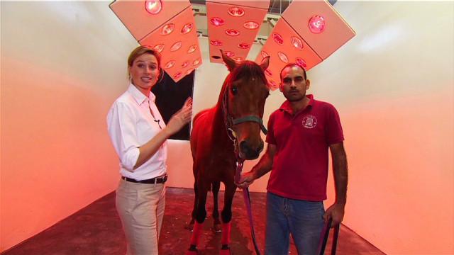 6 star luxury for Qatar race horses