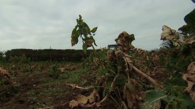 Solving Britain's food waste problem