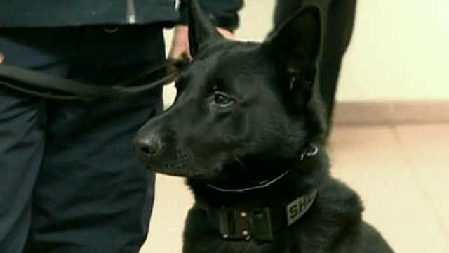 K-9 paws trigger, accidently fires gun