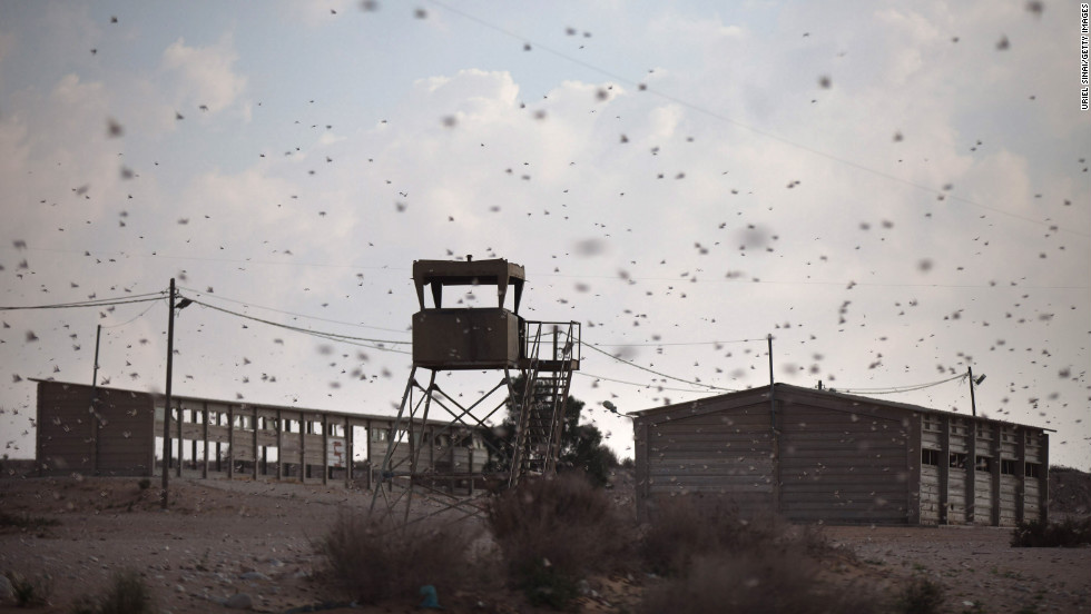 A swarm of locusts moves over an Israeli army firing range in Kmehin on Wednesday.